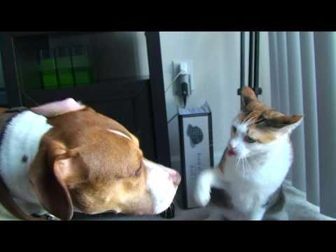 Jokes - Cat Shows To Dog Who The Boss Is