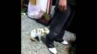 Cat Tries To Protect The Kid