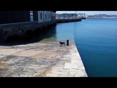 Smart Dog Plays Fetch With Himself