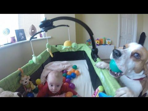 Charlie The Dog Shares His Toys With The Baby Girl