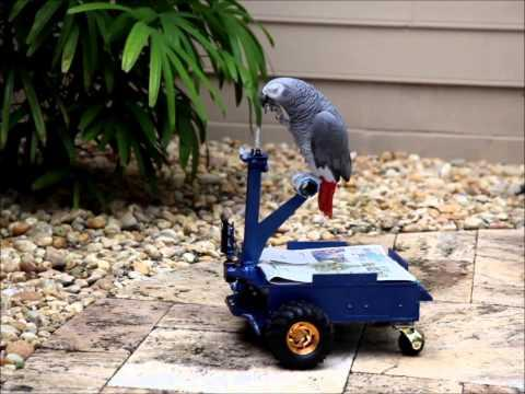 Cool - Buggy For The Parrot