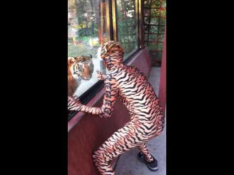 Jokes - Trolling The Tiger At The Zoo