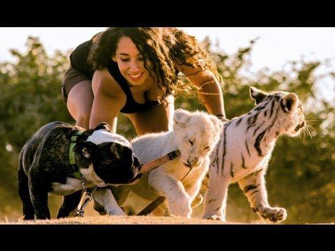 Cute - Bulldog Raises Tiger And Lion Cub