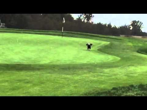 Golf Ball Gets Stolen By Bald Eagle