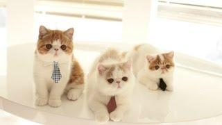 Cats Are Ready To Work