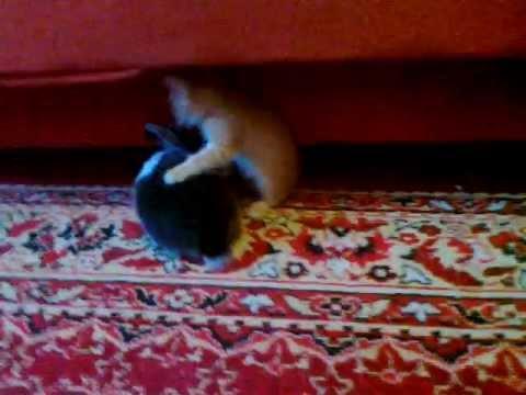 Jokes - Kitten Fights A Bunny