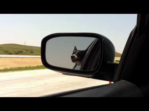 Jokes - Dog Vs Cars