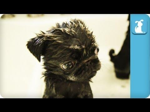 Cute - Bath Time For Puppies