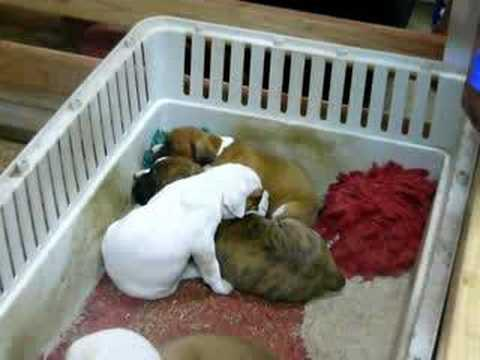 Cute - How To Put Your Puppies To Sleep