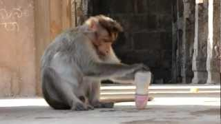 Monkey Vs Baby Milk Bottle