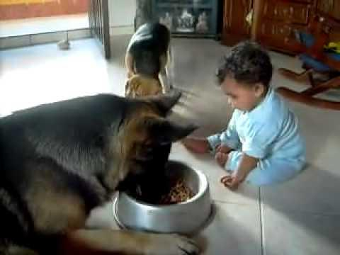 Jokes - Baby Boy Won't Let Dog Eat Food