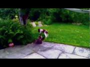 Puppy Play Fights With The Cat In The Backyard