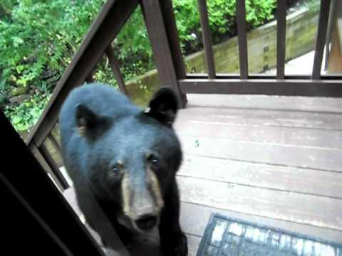 Jokes - Bear Cub Wants To Get Inside