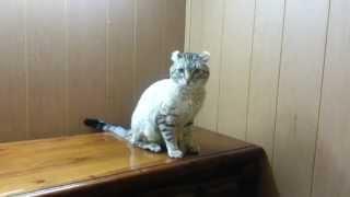 Cat On The Dresser FAIL