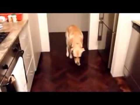 Compilation Of Guilty Dogs