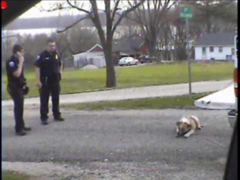WTF - Police Officer Shoots And Kills A Dog