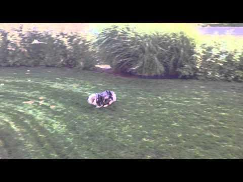 Dog Gets So Excited About Water Hose