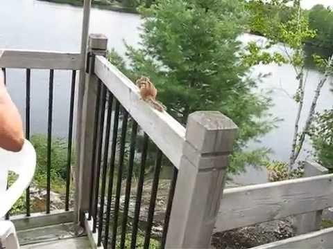 Cute Chipmunk Wants More Treats