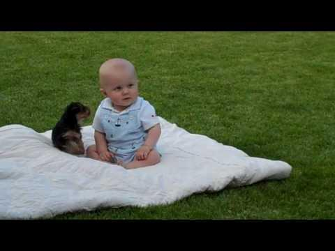 Cute - Puppy Plays With Baby Boy