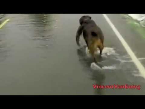 Crazy - Dog Catches Fish