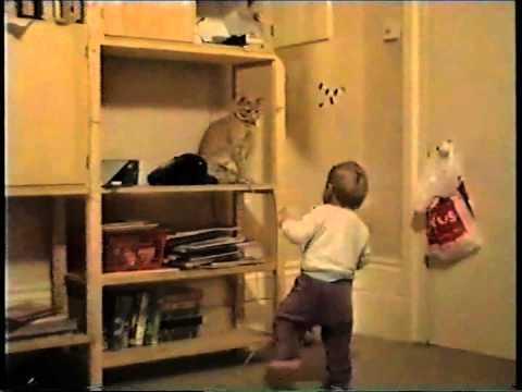 Cats - Bad Kitty