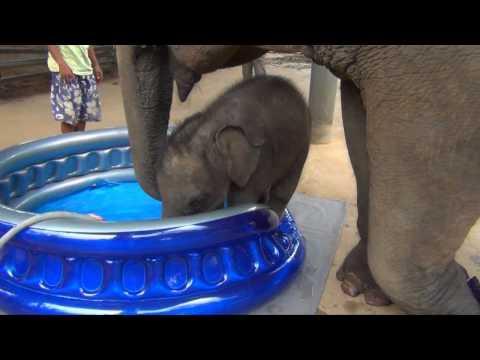 Cute - Baby Elephant's Bath Time