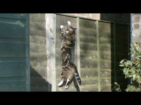 Awesome - Cat Climbs Up The Fence