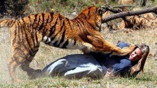 Randy Miller Play Fights With A Tiger