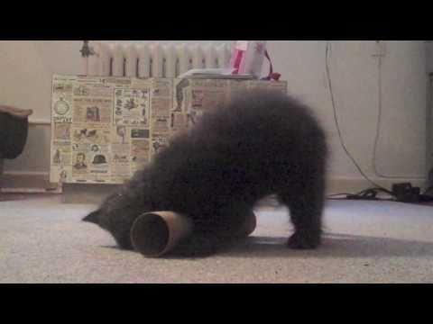 Cute - Cat Yoga Instructional Video