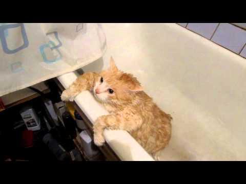 FAIL - Fat Cat Can't Jump