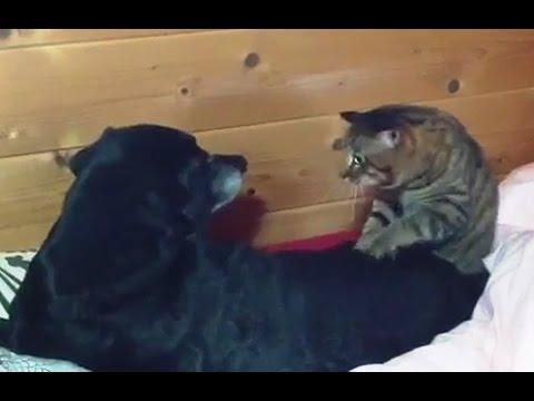 Cats Giving The Dogs A Good Massage