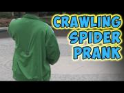 Spider On The Back Prank