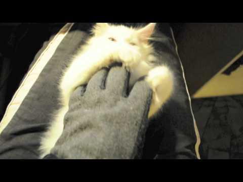 Cute - Cat Falls Asleep Fast