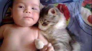 Cat Hugs The Baby