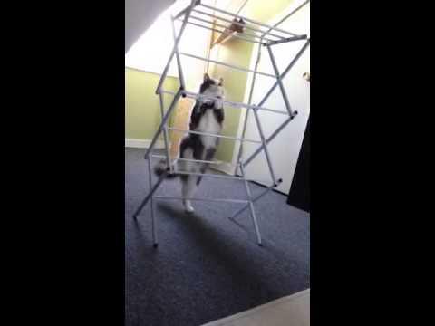 FAIL - Cat Trying To Climb Clothing Rack FAIL