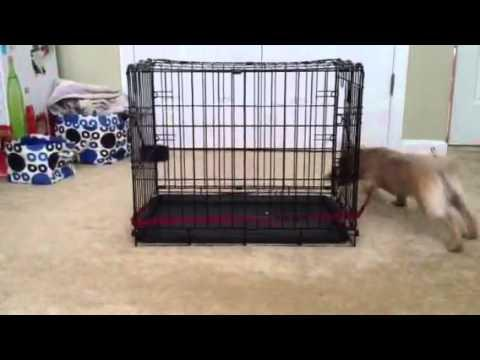 Jokes - Puppy Goes After The Leash