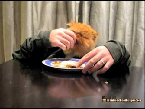 Cats - Kitten Eating With Hands