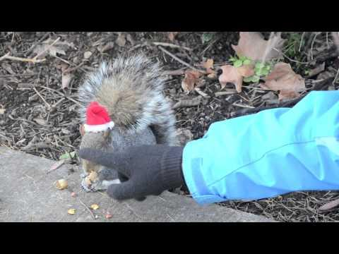 Woman From Penn State Makes Cute Hats For Squirrels