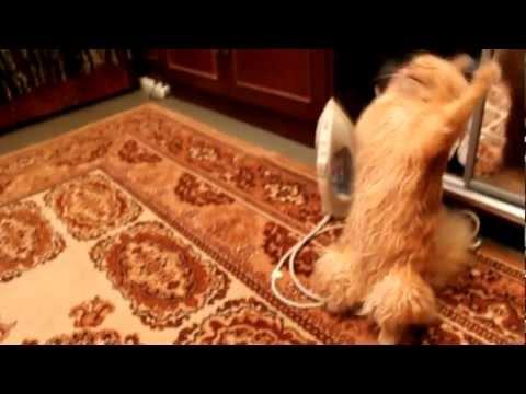 Jokes - Cat Doesn't Like To Wear Rubber Band