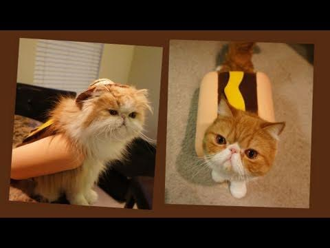Jokes - Cat Dressed As A Hot Dog Eats A Hot Dog