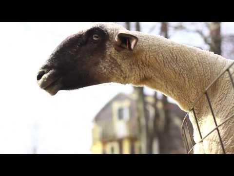 Jokes - Yelling Goats Compilation