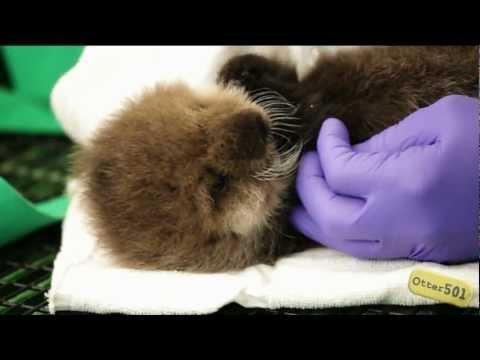 Cute - Sea Otter Pup Sneeze Attack