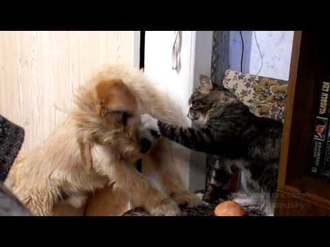 Jokes - Kitty And Dog Fight Over Burger