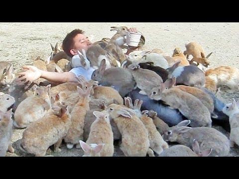 Rabbits Attack The Guy