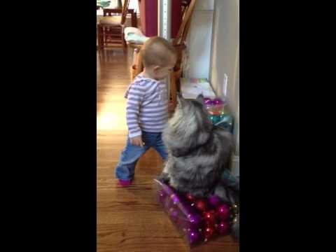 Cute - Baby Girl Talks To The Cat