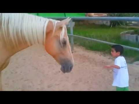 Boy With Williams Syndrome Vs The Horse