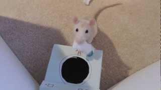 Rats Perform Tricks