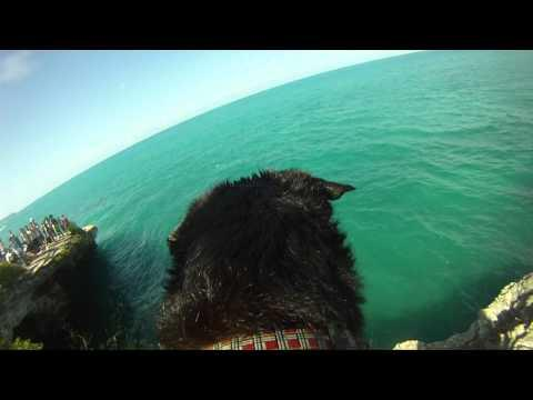 Cute - Cliff Jumping Dog