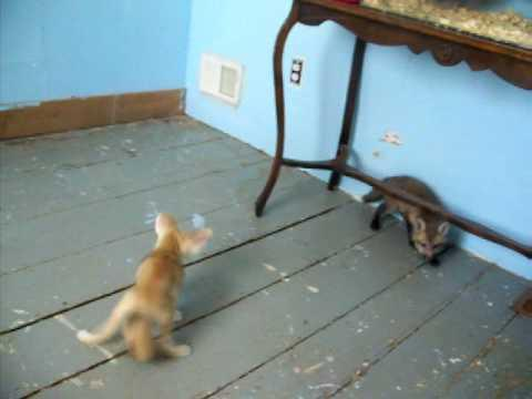 Cute - Play Fighting Fox Cubs