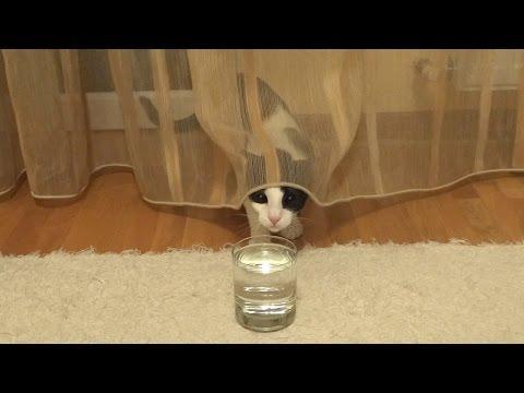 Curious Cat Vs Soda